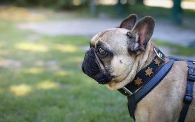Nach Not-OP neues Hundeleben