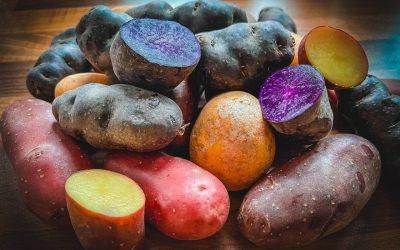 Starke Knolle: die Kartoffel 🥔
